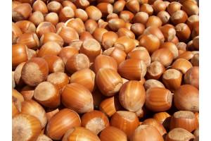 Protein Shake Premix Hazelnut - 4000G