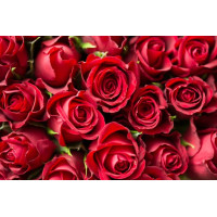 Softy Premix Rose - 800G
